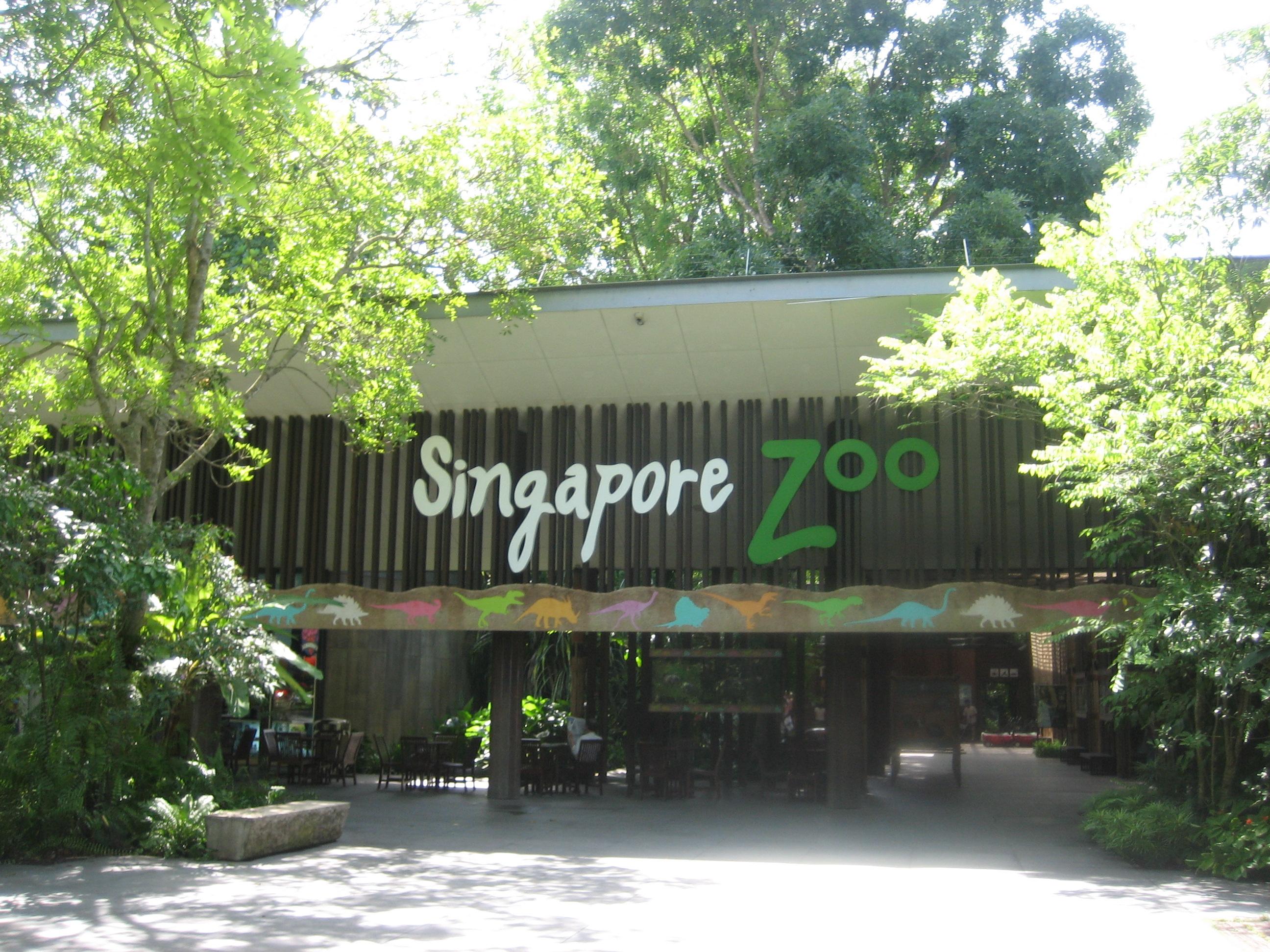 新加坡动物园饲养了世界上最多的人猿